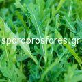 Arugula Seeds Grazia