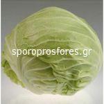 Cabbage Grandslam F1