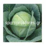 Cabbage SF CL 14001 F1 -Hayko (alternative)
