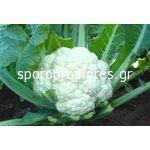 Cauliflower White Ball F1
