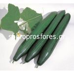 Cucumber AG 23421