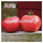 Tomatoes Aphen F1