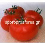 Tomatoes Amaral F1 (Lycopersicum esculentum Mill)