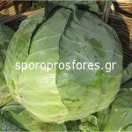 Cabbage Bucharest