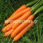 Carrots Carvejo