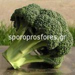 Broccoli Ironman