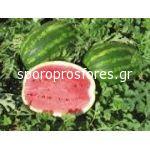 Watermelons Obla F1