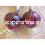 Onions Tropea (Tropea F1)