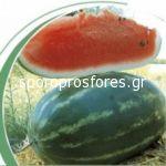 Watermelon Vasco (Vasko F1)