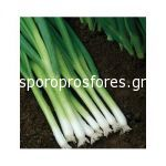 Green Onions Bunching Star F1