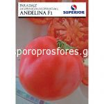 Tomatoes Angelina F1