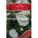 Astra - Gnom White