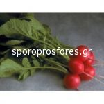 Radishes CHERRIETTE F1