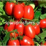 Tomatoes Rio Fuego