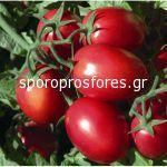 Tomatoes Rio Grande