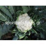 Cauliflower Ferrara F1