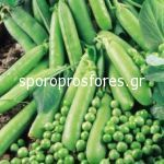 Peas Avola