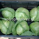 Cabbage Jetma F1