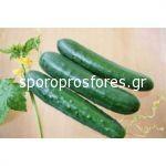 Cucumber Edona F1