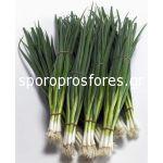 Green Onions Kaigaro F1
