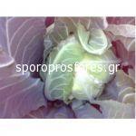 Cauliflower Litoral (Litoral F1)