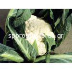 Cauliflower Cercy F1