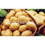Potatoes Maestro Class A