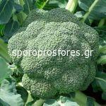 Broccoli Stromboli F1