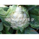 Cauliflower Ardent F1