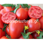 Tomatoes Armira F1
