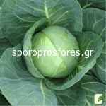 Cabbage Elisa F1
