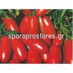 Tomatoes Fenak F1