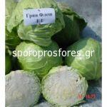 Cabbage Green Flash F1