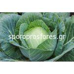 Cabbage Intelo F1