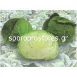 Cabbage Irodori F1