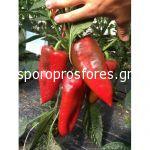 Pepper Kadet F1