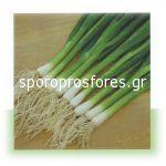 Green onions Carel F1