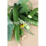 Cucumber Kosara F1