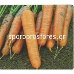 Carrots Maestro