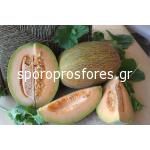 Melons Maestro F1