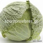 Cabbage Morama F1