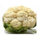 Cauliflower Nautilos (Nautilius F1)