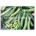 Peas Prelado
