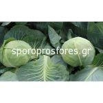 Cabbage Sarmalin F1