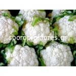 Cauliflower Synergy F1