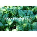Spinach Spanion F1