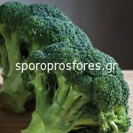 Broccoli Besty F1