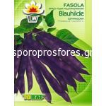 Bean purple Blauhilde
