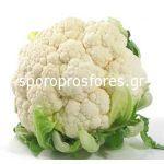 Cauliflower Castor F1