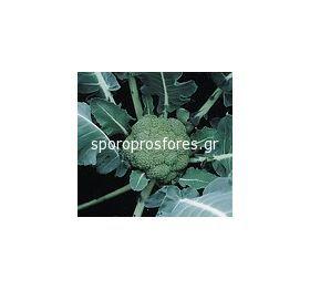 Broccoli Montop F1